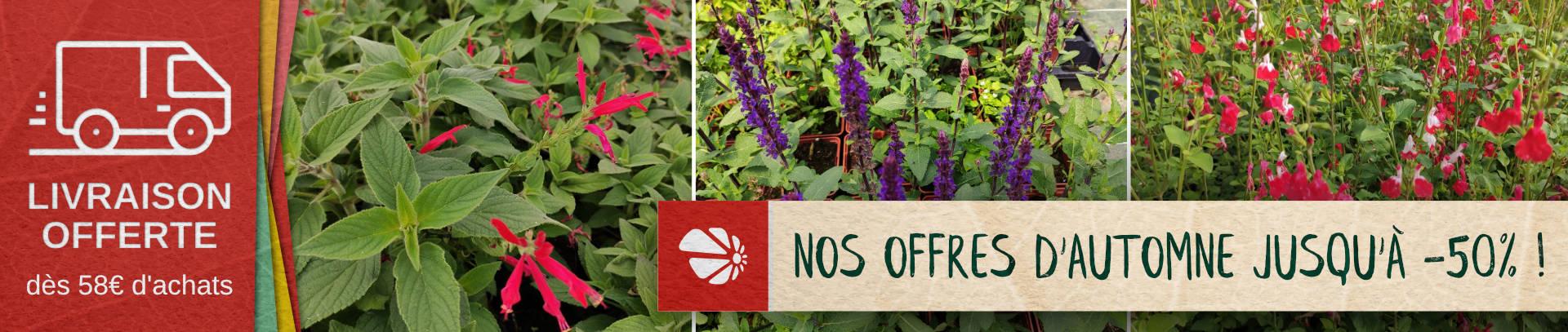 plantes pas chères, jusqu'à -50%