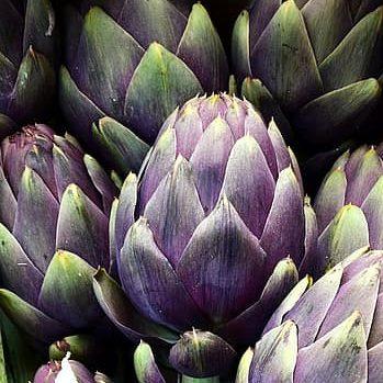 artichaut violet de provence légume